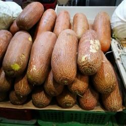 Graines de Concombre Poona...