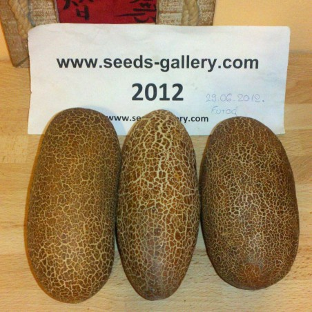 Semillas de Pepino Poona Kheera 2.35 - 2