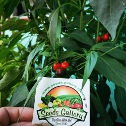 West Virginia Pea Hot Pepper Seeds 1.55 - 6