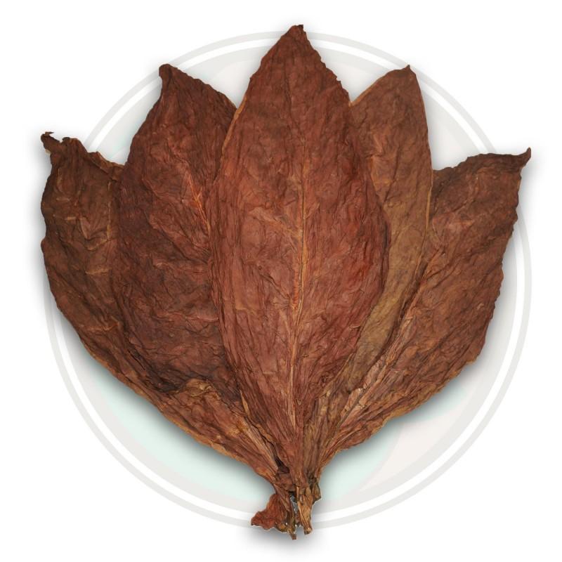 Sementes de Tabaco Cub. Criollo 98 2.5 - 1