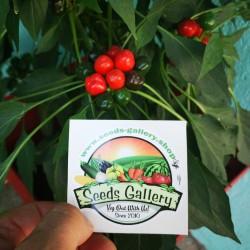 West Virginia Pea Hot Pepper Seeds 1.55 - 9