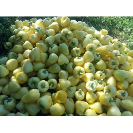 Somborka hot bell pepper seeds 1.85 - 8