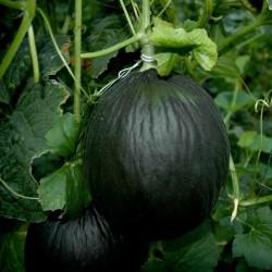 Svart Melon frön 2.45 - 4