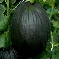 Σπόροι πεπονιού Μαύρο 2.45 - 3