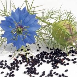 Graines de Cumin Noir - Nigelle (Nigela Sativa) 2.45 - 1