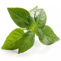 Basil Seeds MIX 4 different varieties 2 - 3