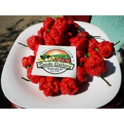 Sementes Pimenta Trinidad Scorpion Morouga 1.95 - 3