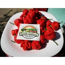Перец Скорпион Тринидада семена (Trinidad Scorpion) 1.95 - 3