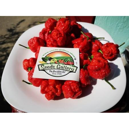 Σπόροι Τσίλι πιπέρι Trinidad Moruga Scorpion 1.95 - 3