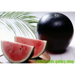 Schwarze Wassermelone super süss Samen!