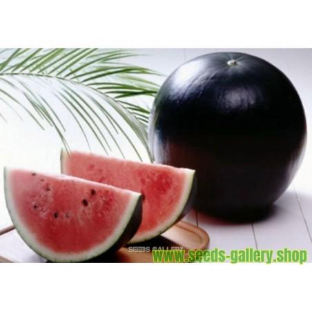 Graines Melon d'eau noir