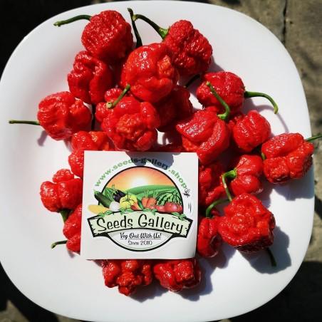 Σπόροι Τσίλι πιπέρι Trinidad Moruga Scorpion 1.95 - 2