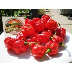 Sementes Pimenta Trinidad Scorpion Morouga 1.95 - 4