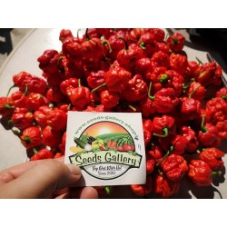 Trinidad Moruga Scorpion Seeds Worlds Hottest 1.95 - 5