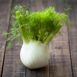 FLORENCE Fenchel Samen, Heilpflanze und Gewürz 1.85 - 1
