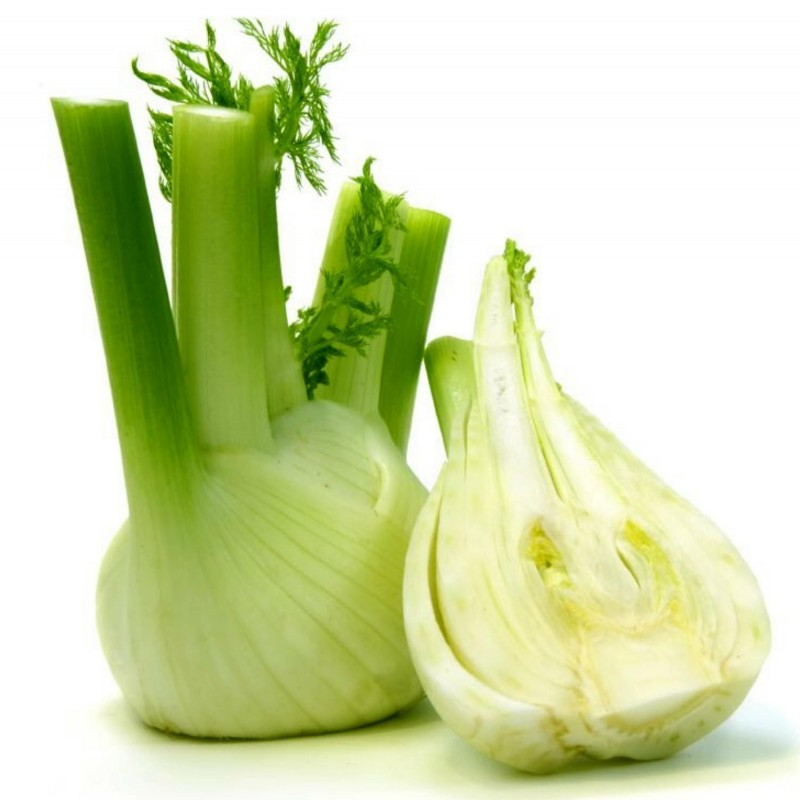 FLORENCE Fennel Seeds large bulbs 1.85 - 3