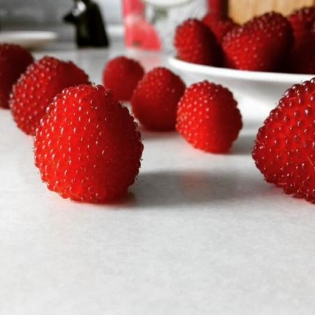 Jordgubbshallon Frön (Rubus illecebrosus) 0 - 1