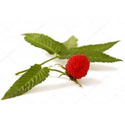 Jordgubbshallon Frön (Rubus illecebrosus) 0 - 3