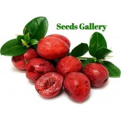 Natal Plum Seeds (Carissa macrocarpa) 2.5 - 1