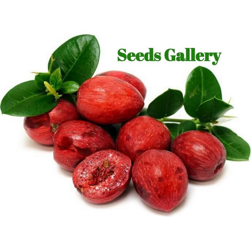 Карисса крупноцветковая, Ягодичная слива семена 2.5 - 1