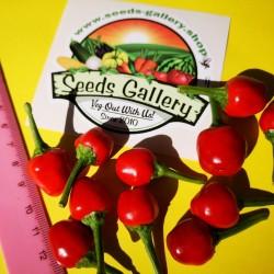 West Virginia Pea Hot Pepper Seeds 1.55 - 2