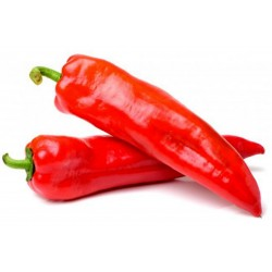 MARCONI RED Sweet Pepper Seeds 1.65 - 3
