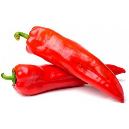 MARCONI RED - Crveni Seme Slatke Paprike