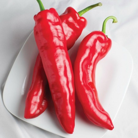 MARCONI RED Sweet Pepper Seeds 1.65 - 1