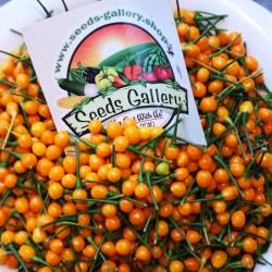 Getrocknete Charapita-Früchte mit Samen 20 - 2