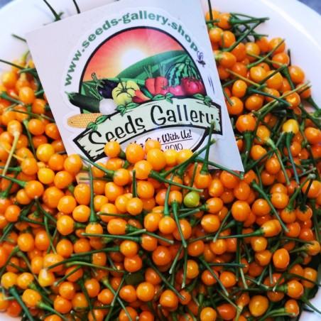 Charapita Chili Samen 2.25 - 2