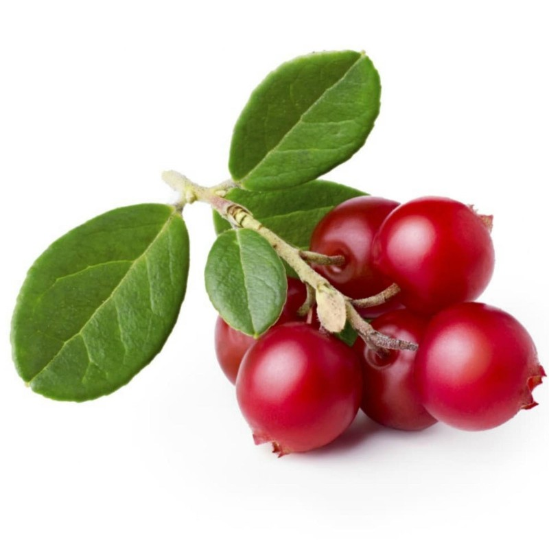 Lingonberry or Cowberry Seed 1.85 - 1