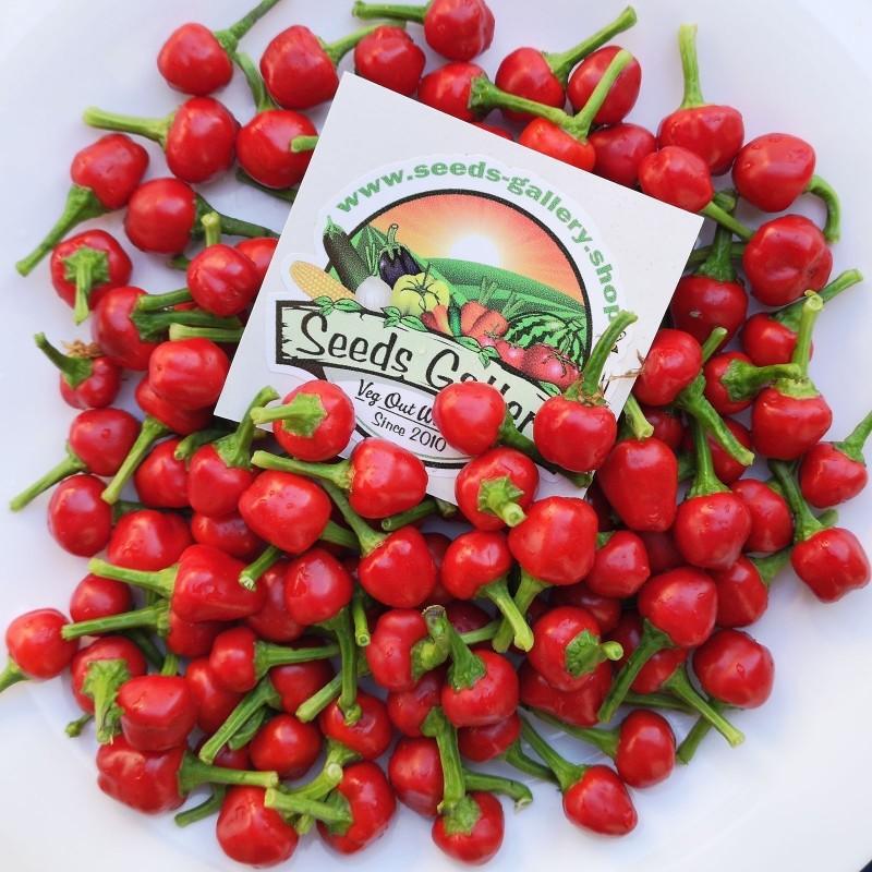 West Virginia Pea Hot Pepper Seeds 1.55 - 1