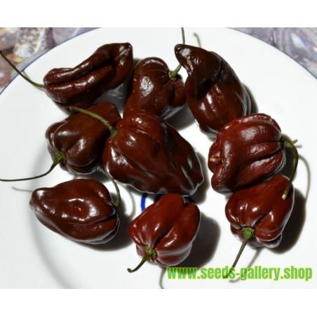 Habanero ChocolateSamen Braun