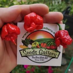 Sementes da Pimenta Carolina Reaper vermelho e amarelo 2.45 - 2