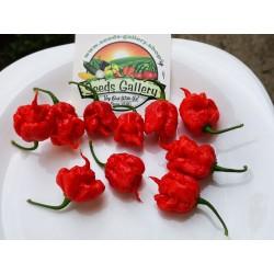Sementes da Pimenta Carolina Reaper vermelho e amarelo 2.45 - 3