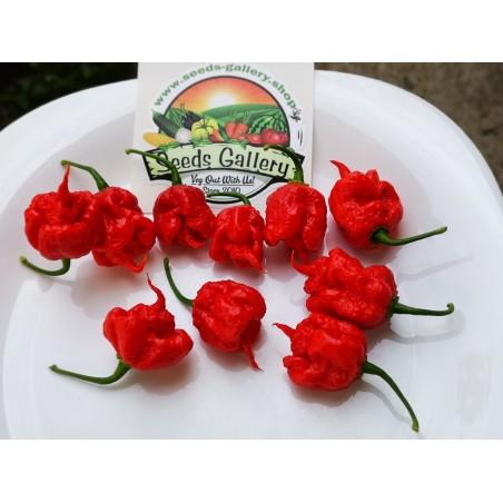 Carolina Reaper 2 Grams broken fruits World Record Hottest! HP22B 2.5 - 2