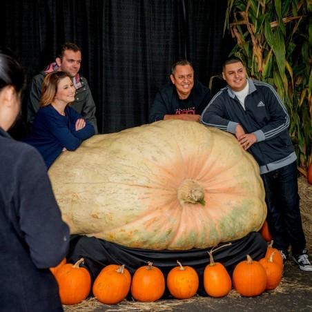 GOLIATH Giant Pumpkin Seeds 3 - 2