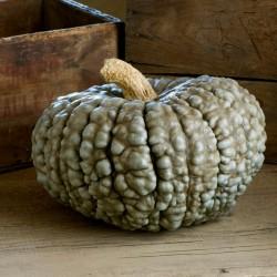 Marina Di Chioggia pumpkin Seeds 1.99 - 2