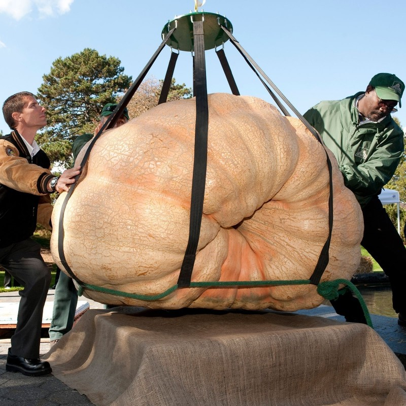 Atlantic Giants Pumpkin Seeds 3.65 - 5