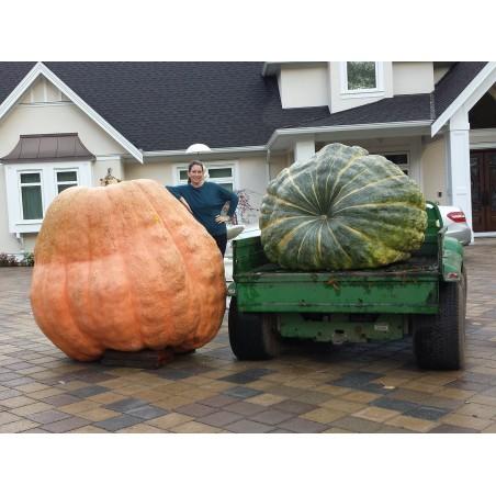 Atlantic Giants Pumpkin Seeds 3.65 - 4