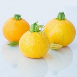 Yellow Round Squash - Zucchini Seeds 1.95 - 2
