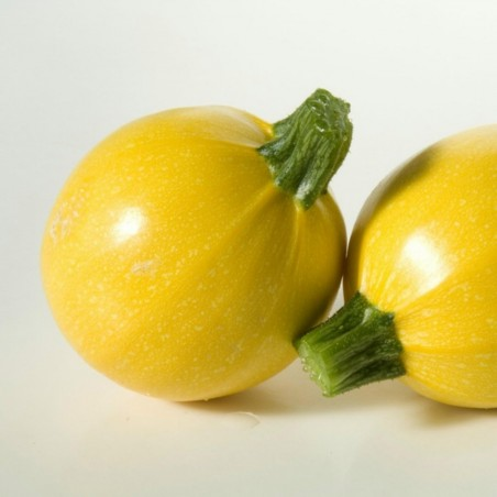 Yellow Round Squash - Zucchini Seeds 1.95 - 4