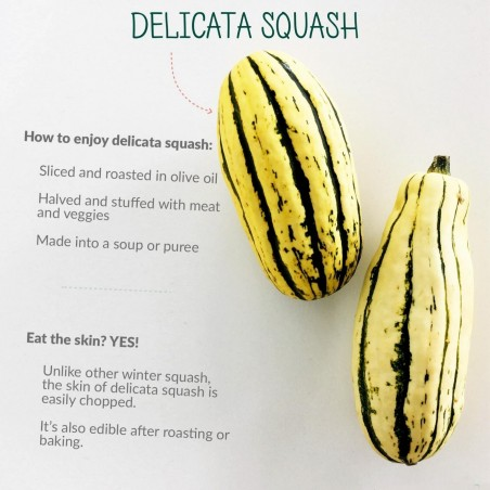 DELICATA Squash Seeds 2 - 1