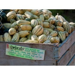 Semi di Zucchino DELICATA 2 - 2