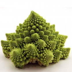 2000 Seeds Cauliflower  Romanesco 11 - 4