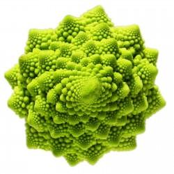 2000 Seeds Cauliflower  Romanesco 11 - 3