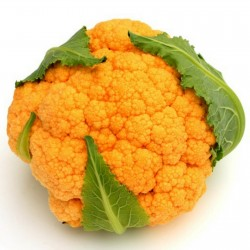 Orange Cauliflower Seeds 2.75 - 1