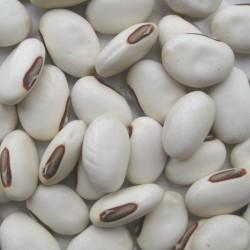 """Japanischer Riesen Weiße Schwertbohne Samen """"Shironata Mame"""" 1.95 - 1"""