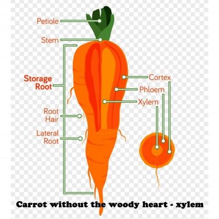 Carrot seeds, long blunt, xylem free (heart) 2.35 - 2