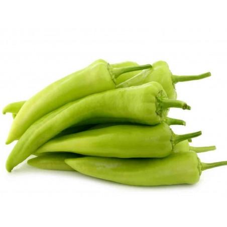 Süßer Paprika Samen ECSTASY 2.45 - 1